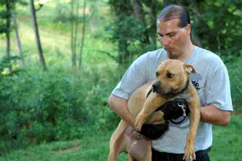 Tim Rickey, the ASPCA's Senior Director of Field Operations holds Dharma, a three year-old pit bull whose leg was chewed off in a fight.