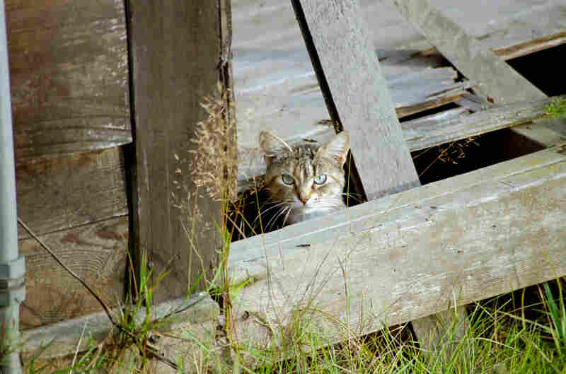 A cat peeks out from beneath a porch.