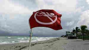 A warning flag on the empty beach in Dania Beach, Fla. Tuesday, Sept. 28, 2010.
