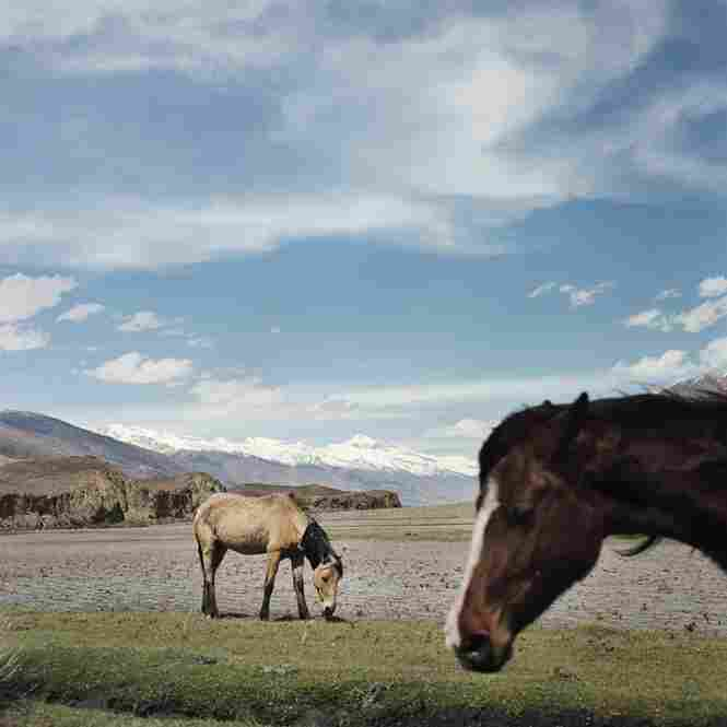 Horses graze in the Wakhan Corridor as grass begins to grow after the long winter. For much of the year, the snow is so deep that travel between villages is impossible.