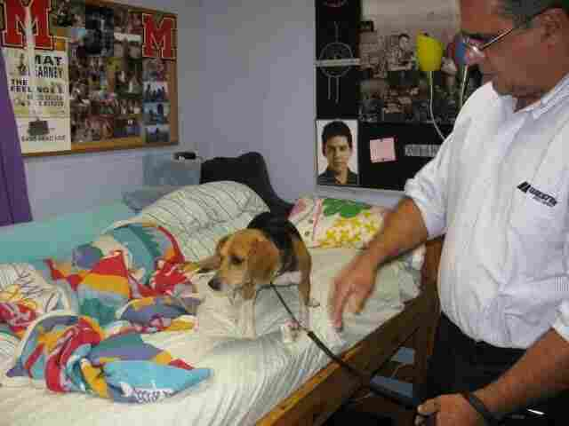 Dixie searches for bedbugs at a private school near Baltimore with the help of her handler Blaine Lessard.