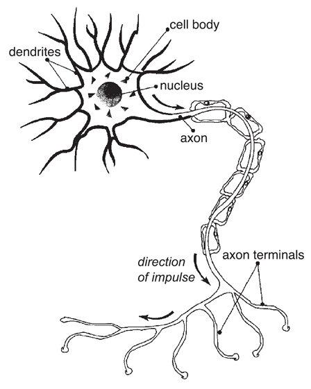Twitchy Nerves Literally May Explain Epilepsy Pain Npr