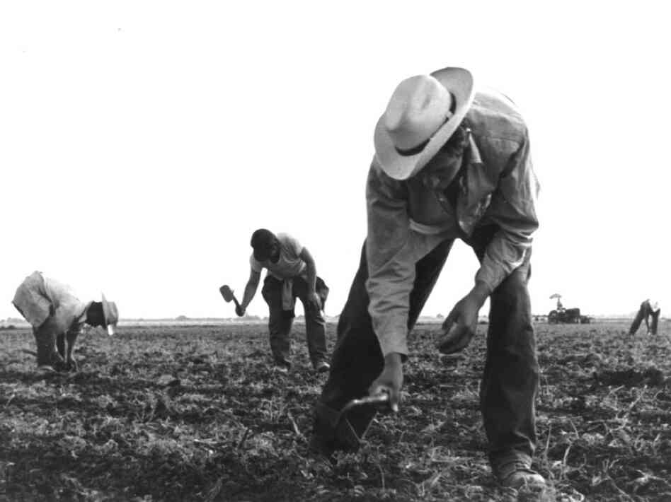 The short-handled hoe, used by workers in the field, was a tool that came to symbolize the exploitation that farm workers suffered for decades. Migrant workers had no representation, so Chavez decided to first organize a worker's organization.
