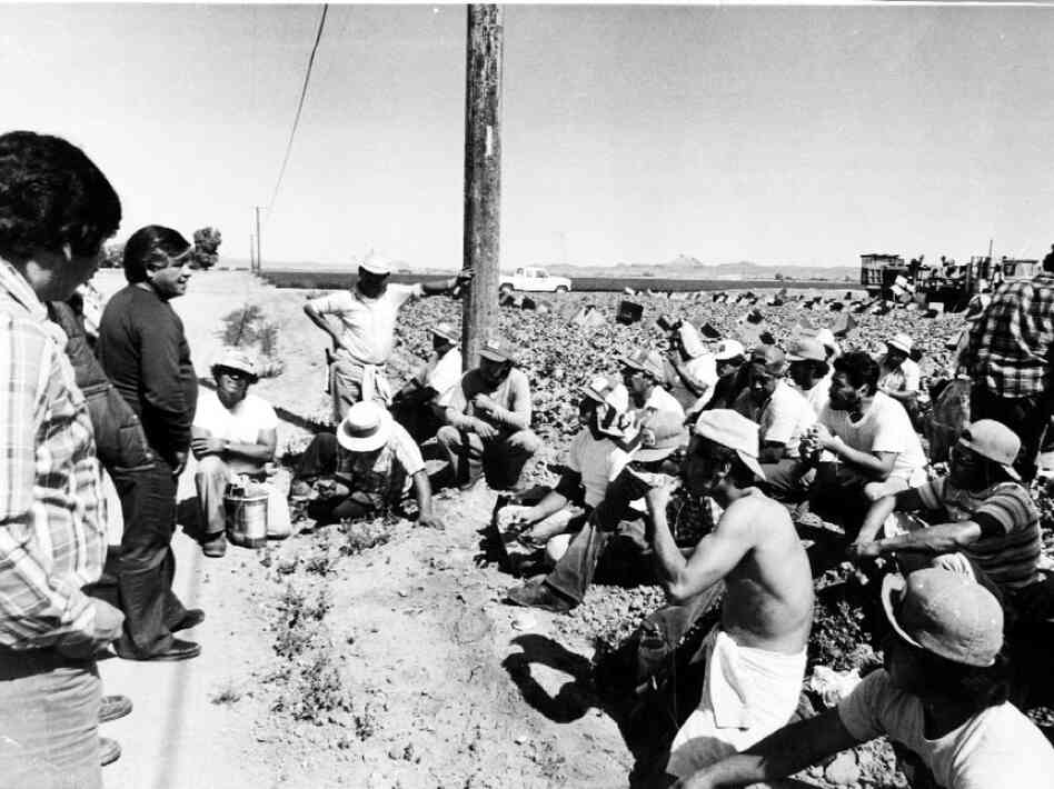 Cesar Chavez is shown here joining the farm workers as a sign of help ...