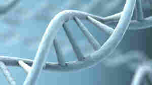 Study: Lifestyle Factors May Alter Genetic Traits