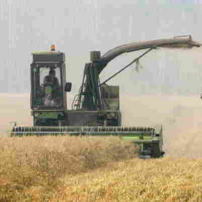 Grainy Season: Engineering Drought-Resistant Wheat