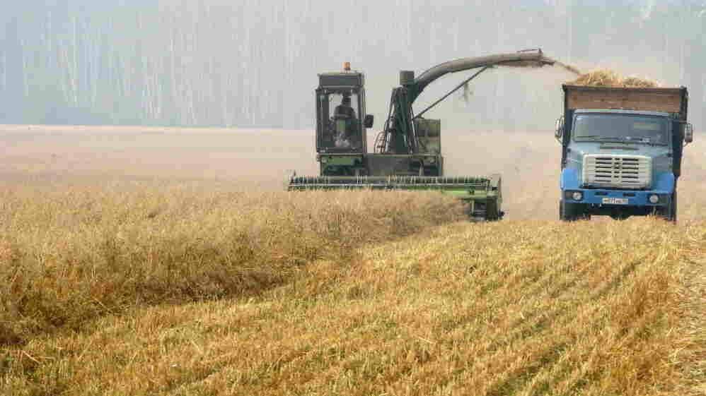A combine harvests a field outside Moscow.