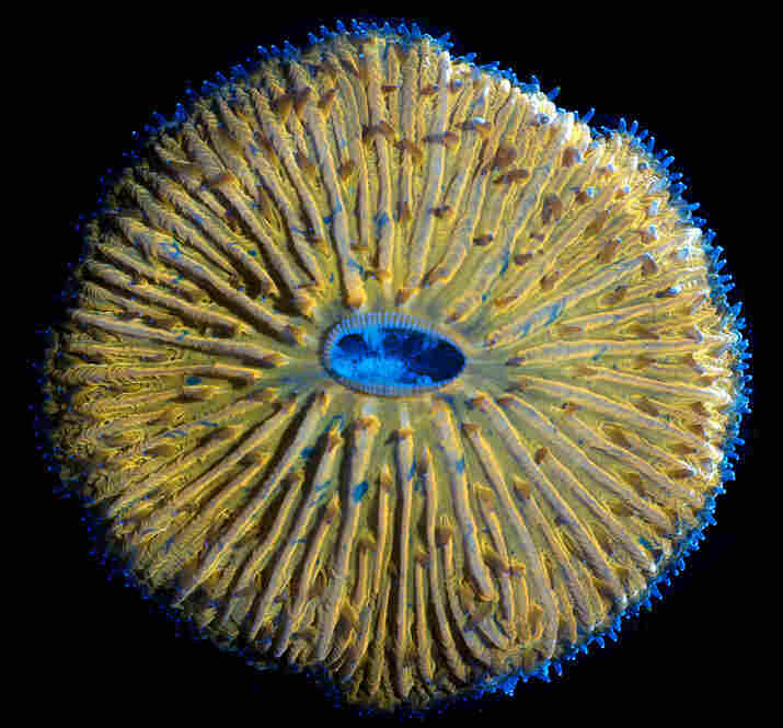 13th Place: James NicholsonMushroom coral, 166x