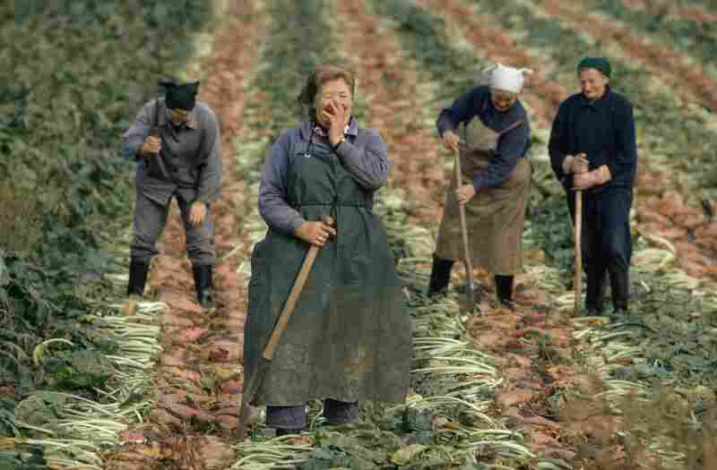 Women laugh while harvesting sugar beets near Wismar, Germany