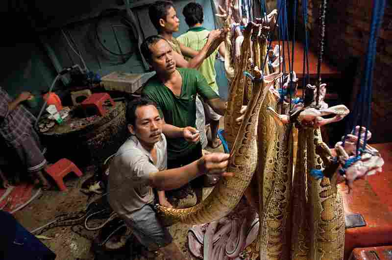 Every day, workers in Sumatra slaughter and skin hundreds of reptiles brought to them by trappers. The dried skins are sold to the international leather-goods industry, to be made into luxury and fashion items such as wallets, belts and boots.