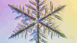 Snowflake Shapes Shine Under The Microscope