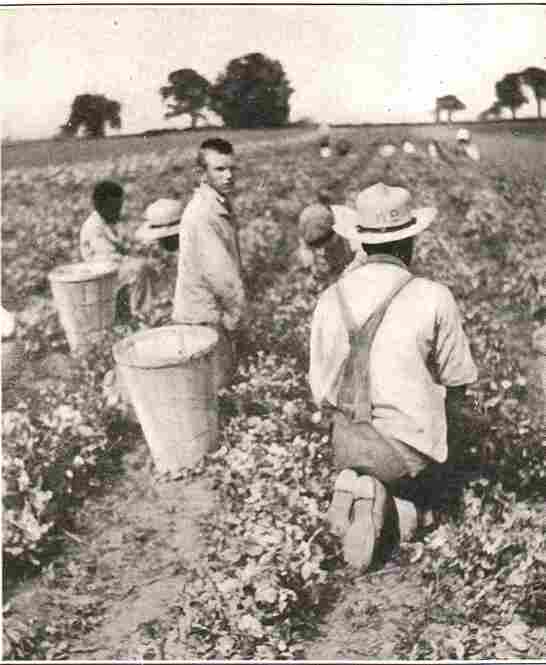 Pennhurst patients pick peas in a field in a photograph from 1918. According to a 1954 brochure, a farm along the nearby Schuylkill River provided most of Pennhurst's food for patients.