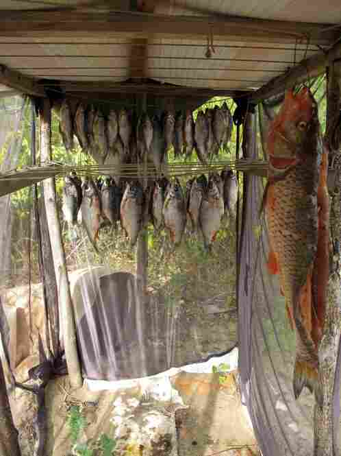 Anatolievich hangs his fish to dry before smoking his catch over a wood fire.