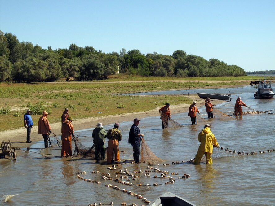 Volga River Towns Fade Along With Prized Sturgeon  NPR