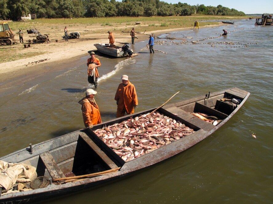 ловля на реке волга видео