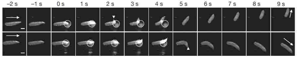 Light-avoidance in fruit fly larva