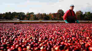Bow Down To The Medicinal Power Of Cranberries