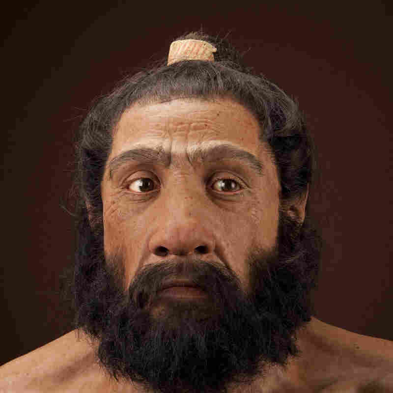 Homo neanderthalensis adult male.  Reconstruction based on Shanidar 1 by John Gurche for the Human Origins Pro