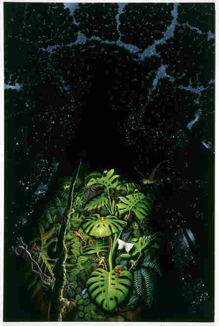 Kapok Tree, 1995