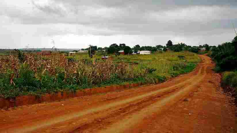 A cornfield near the Kumbali Lodge in Malawi