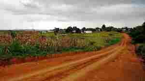 A cornfield near the Kumbali Lodge in Malawi