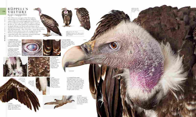 Natural History, page 434-435.