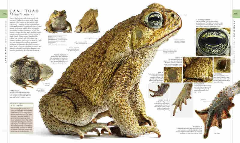 Natural History, page 356-357.