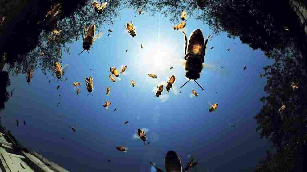 Bees fly around a beehive.