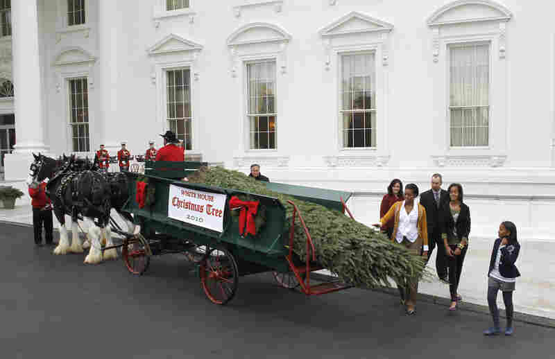 First lady Michelle Obama, with daughters Sasha and Malia, welcome the arrival of the official White House Christmas tree at the White House last week. Walking behind the first lady are Brandi and Chris Botek of the Crystal Spring Tree Farm in Leighton, Pa., where the tree was cut.
