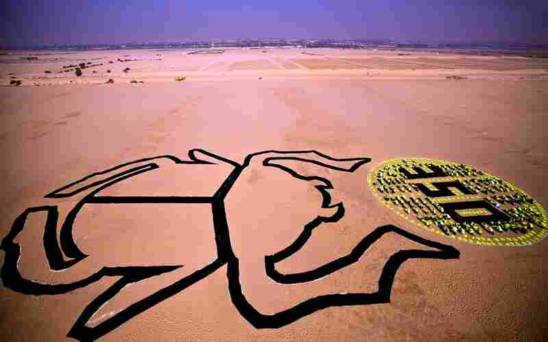 In Cairo, Egypt, hundreds of students formed the image of a traditional scarab beetle, a traditional symbol of rebirth and regeneration. The demonstration is a reminder of the integral part of the sun in Egyptian history, and a call for re-examining our modern relationship to this source of clean energy.
