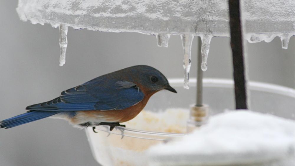 Bird Feeding Tips For The Urban Yard : NPR