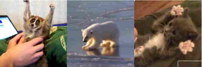 A slow loris, a polar bear, and a kitten