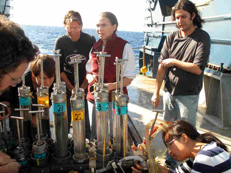 Joye (center in red) and other researchers examine core samples brought up from the seafloor. The team uses the cores to study the oily sediment that coats the bottom of the ocean.