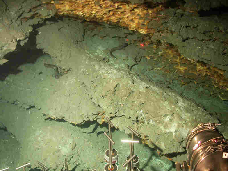 At the bottom of the Gulf, Alvin explores a wall of methane ice where crabs feed on small worms that live in the nooks in the ice. The two red laser spots are about four inches apart.