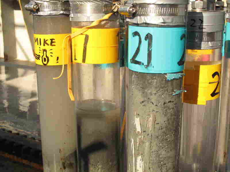 Many of the core samples studied so far have a dark top layer that scientists say is a mixture of oil and oil that has been digested by marine life and bacteria.