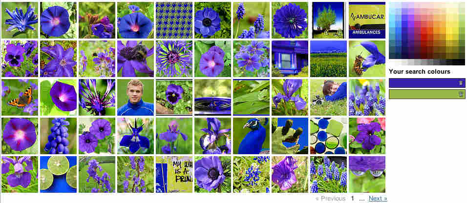 50 photos with green and purple.