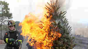 Oh, Christmas Tree: Stay Hydrated And Don't Catch Fire!