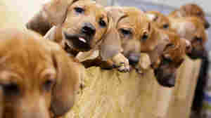 Seventeen Puppies Survive The Odds