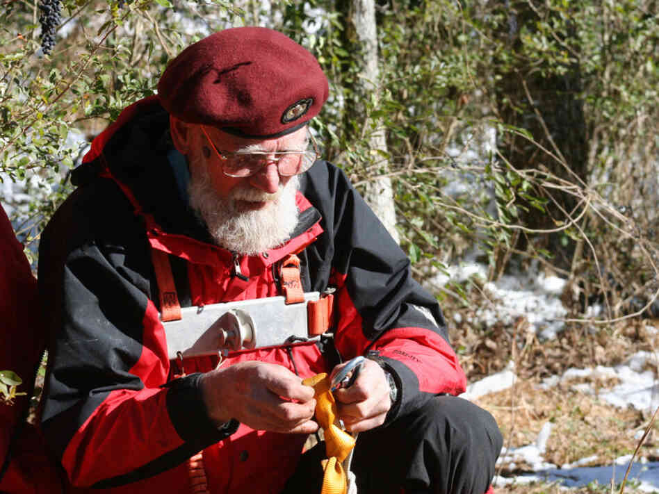 Bill Anderson readies his climbing gear before harvesting a sprig of mistletoe from the top of a tree. Anderson'sold-fashioned mistletoe harvesting is steeped in tradition.