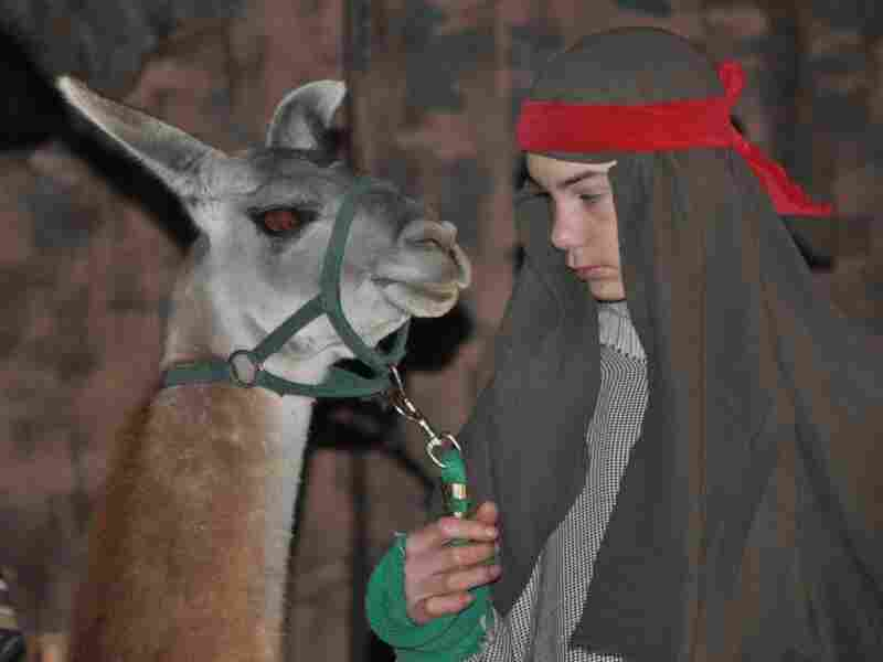 This year during the living nativity at First United Methodist Church in Johnson City, Texas, Joseph led in a miniature donkey.