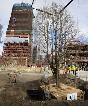 Tree That Survived 9/11 Makes Debut in Commemorative Film ...