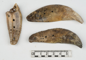 The discovery of incisor teeth from grizzly bears, which are not native to Indiana, shows that Hopewell residents of the Mann Site had contact with the North American West, where grizzly bears are more common.