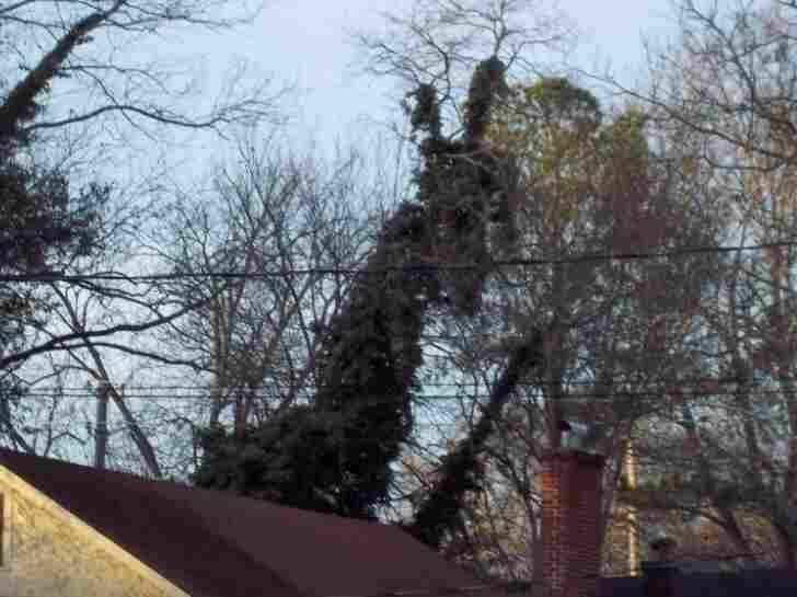 Photo of tree monster.