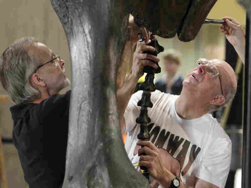 Mark Brown (left) and senior curator Bob Glotzhober remove the tail from the Conway mastodon at the Ohio Historical Society in Columbus on Thursday. The skeleton of the Ice Age pachyderm is being disassembled so it can be reassembled in a more flattering position.