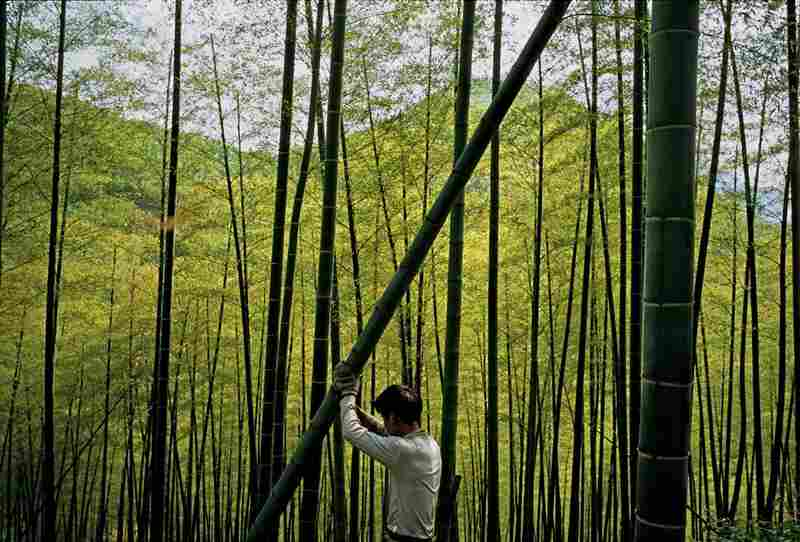 Resources that can be replenished, like China's bamboo, will be crucial as the world's population continues to expand.
