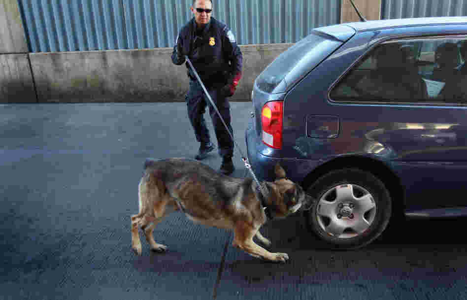 U.S. Border Patrol officer Michael Avelar and drug-sniffing German Shepherd Ali inspect a vehicle.
