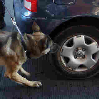 Report: Drug-Sniffing Dogs Are Wrong More Often Than Right