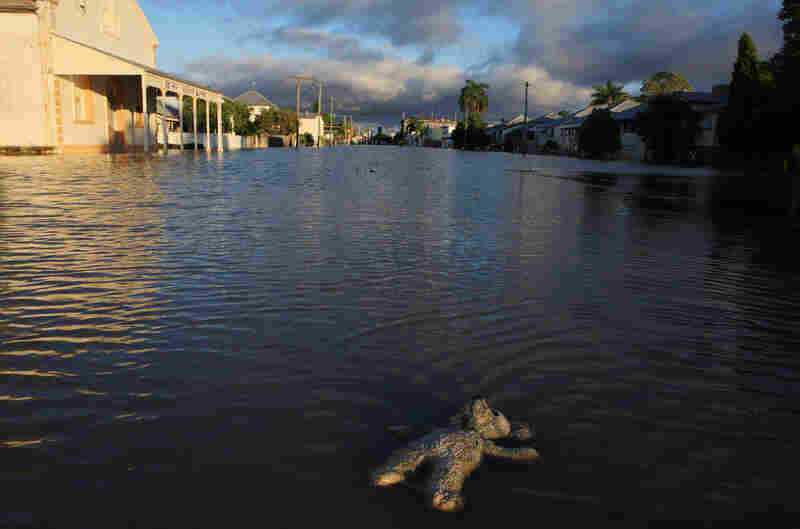 A stuffed animal floats in a flooded suburban street in Rockhampton. (Jonathan Wood/Getty Images)'