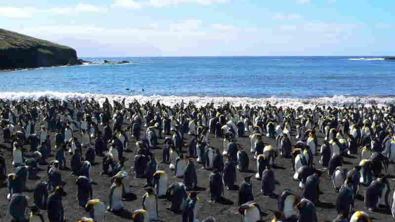 Penguin colony on a beach