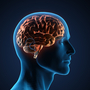 Even basic sensory maps in the brain can be remapped in a matter of months, says neurologist V.S. Ramachandran.